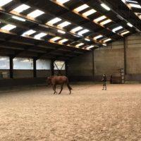 magarinohorsetrading_stable6